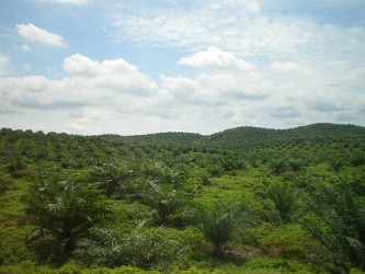 12 Things (Good & Bad) You Need To Know About Oil Palms & Palm Oil