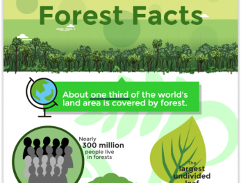 [Infographic] Malaysian Forest Facts