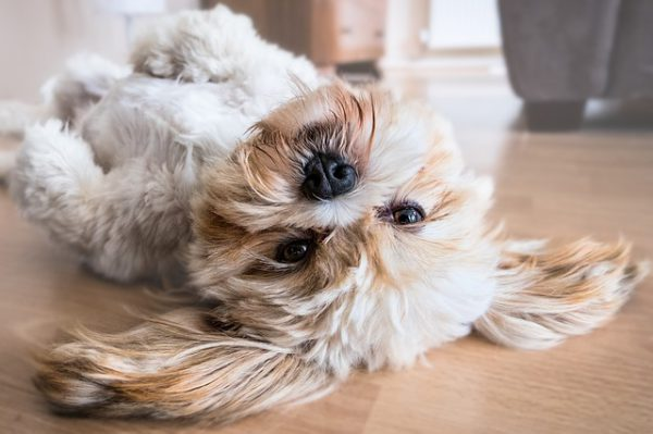 Renting Your Property to Pet Owners: Yay or Nay?
