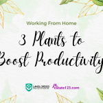 Working From Home: 3 Plants to Boost Productivity